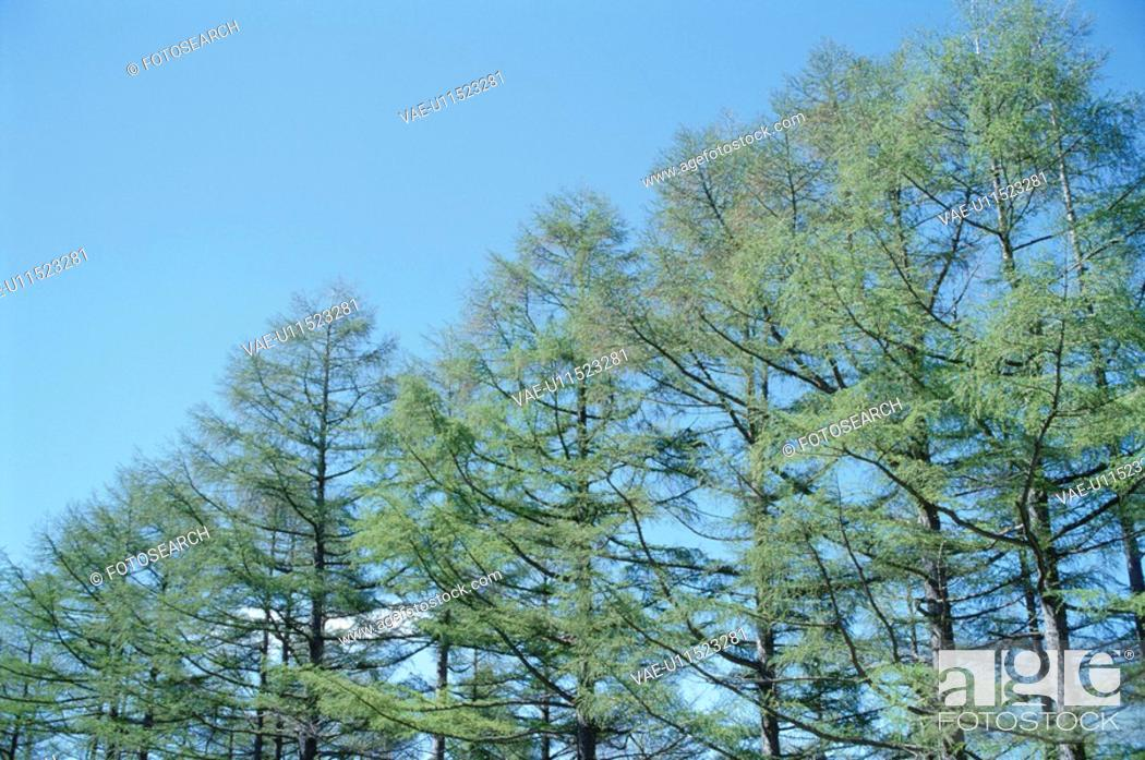 Stock Photo: The Sky And Trees.