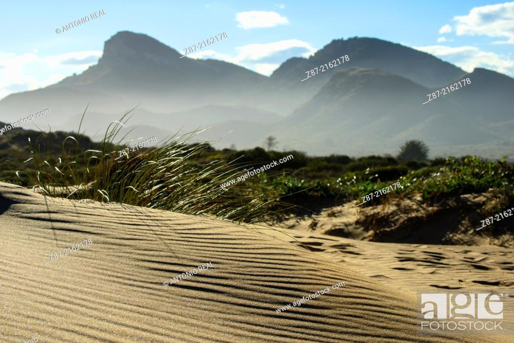 Stock Photo: Dunes, Calblanque Regional Park, Cartagena, Murcia, Spain.