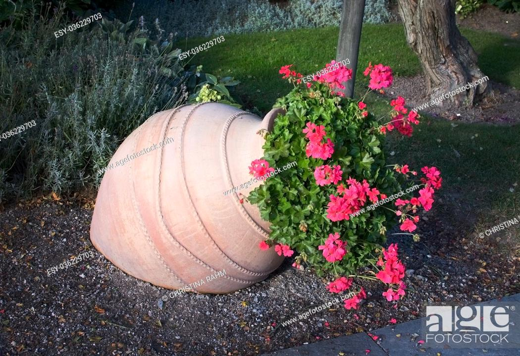 Stock Photo: Pink geranium flowers in terracotta vase outdoors.