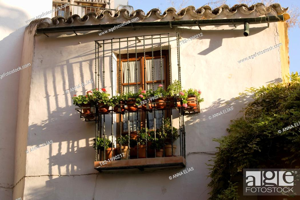 Stock Photo: Typical house plants and bars in the neighborhood of Santa Cruz, Sevilla, Andalucia, Spain.