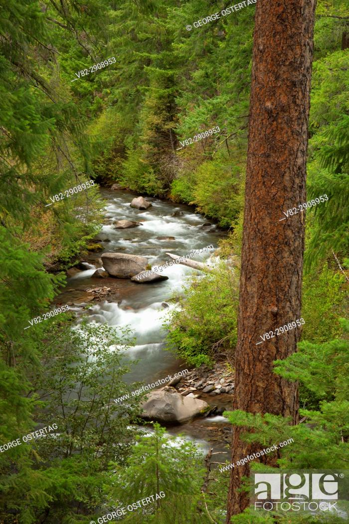 Stock Photo: Whychus Creek along Whychus Creek Trail, Whychus Creek Wild and Scenic River, Deschutes National Forest, Oregon.