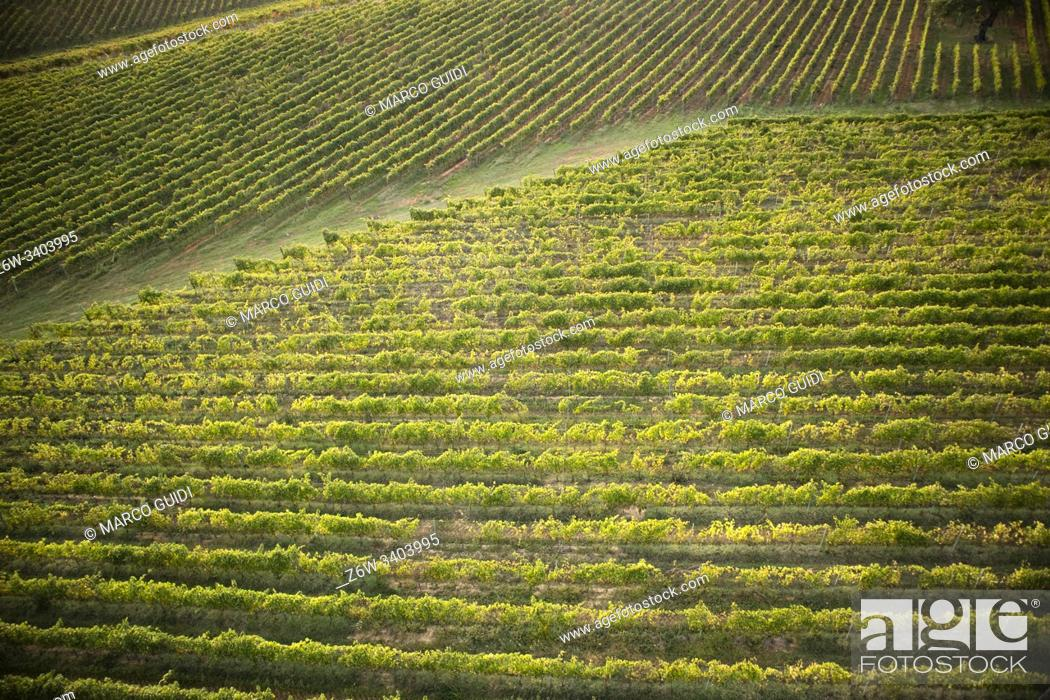 Stock Photo: Top view of grape cultivation in Tuscany Italy.