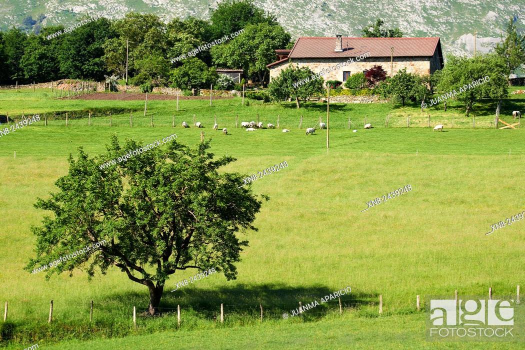 Stock Photo: Animals grazing in Farmhouse in Durango, Biscay, Basque Country, Euskadi, Euskal Herria, Spain, Europe.