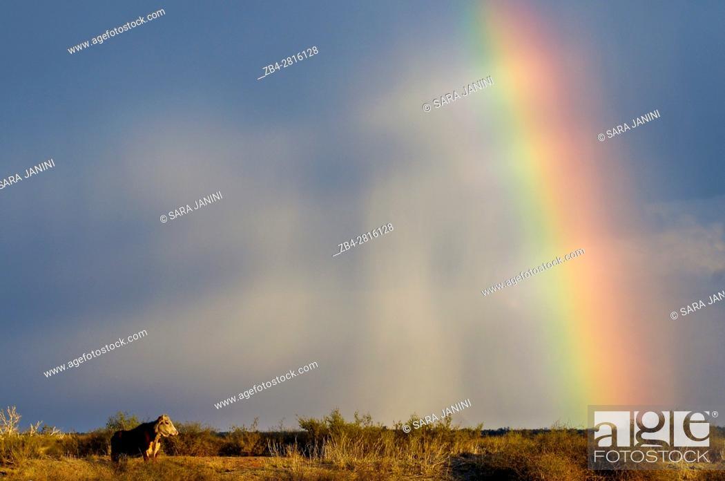 Stock Photo: The Stuart Highway, Northern Territory, Australia, Oceania.