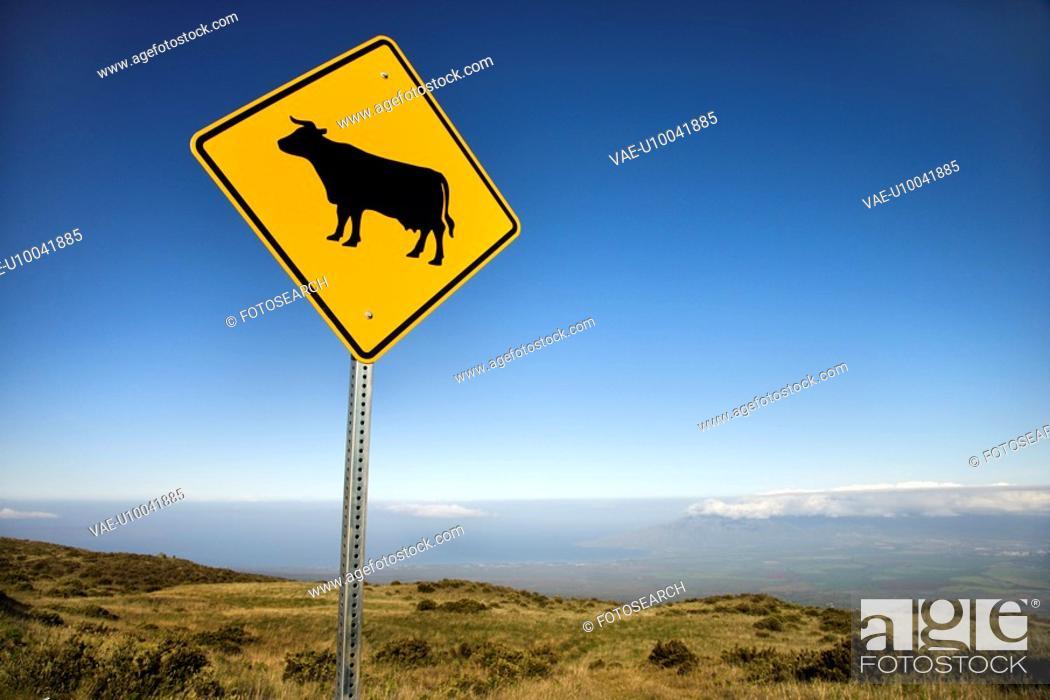 Stock Photo: Cow crossing road sign in Haleakala National Park, Maui, Hawaii.