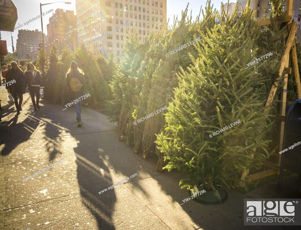Pedestrians Pass A Christmas Tree Seller In The Chelsea Neighborhood