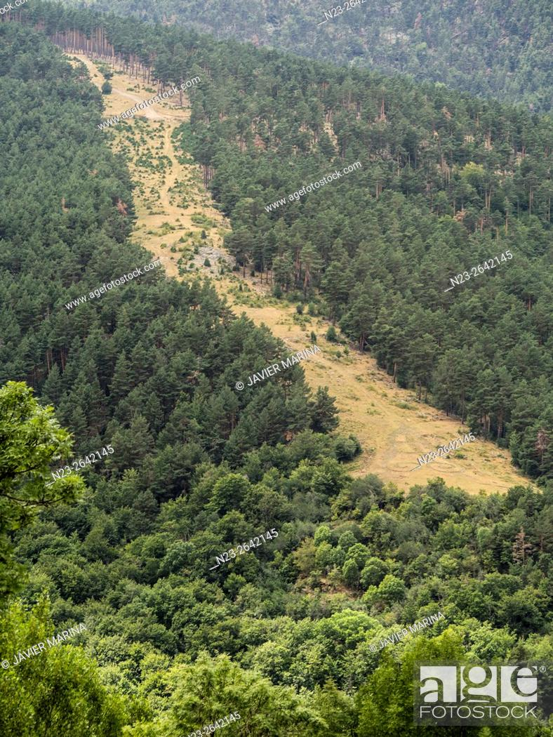 Stock Photo: Forest firebreak, Sierra Cebollera, La Rioja, Spain.