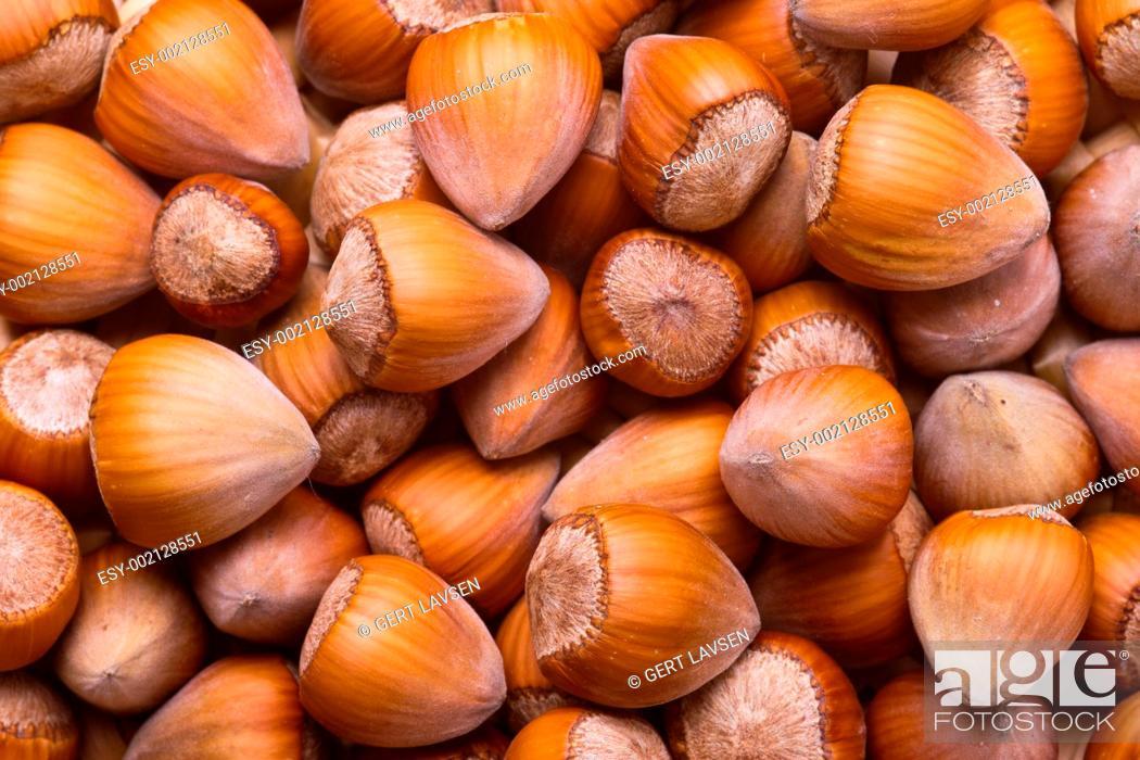 Stock Photo: Hazelnuts.