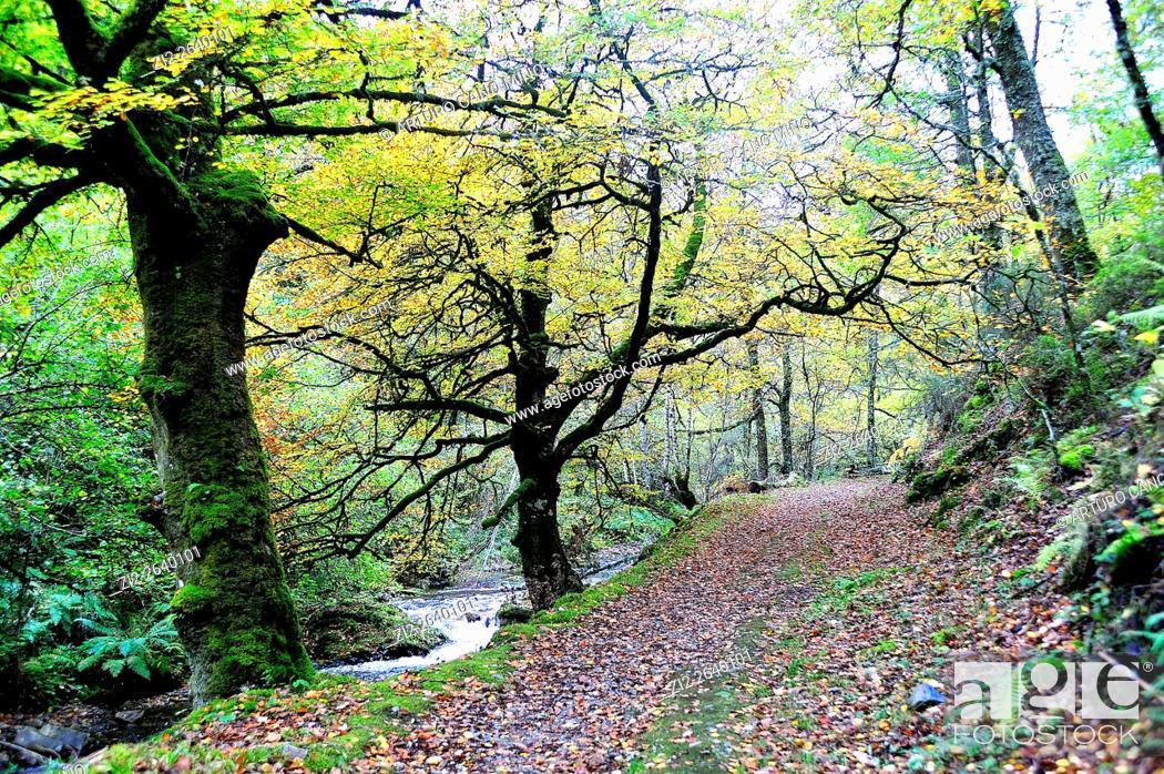 Stock Photo: The Muniellos Nature Reserve, Asturias, Spain.