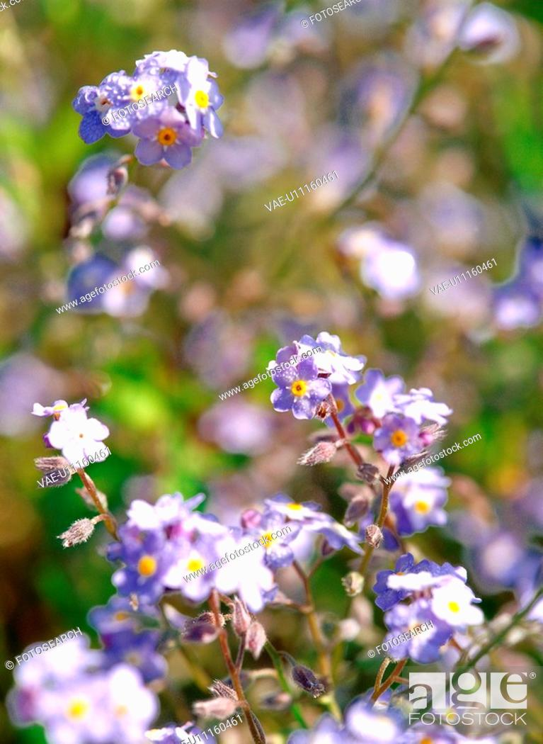 Stock Photo: flower, season, plant, nature, spring, film.
