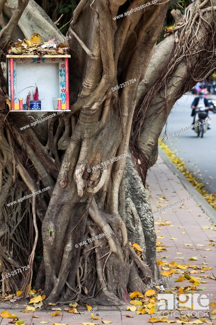 Imagen: Vietnam, Hue, tree and shrine.