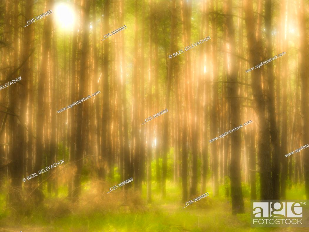 Stock Photo: Forest and light spots photographed with a monocle.