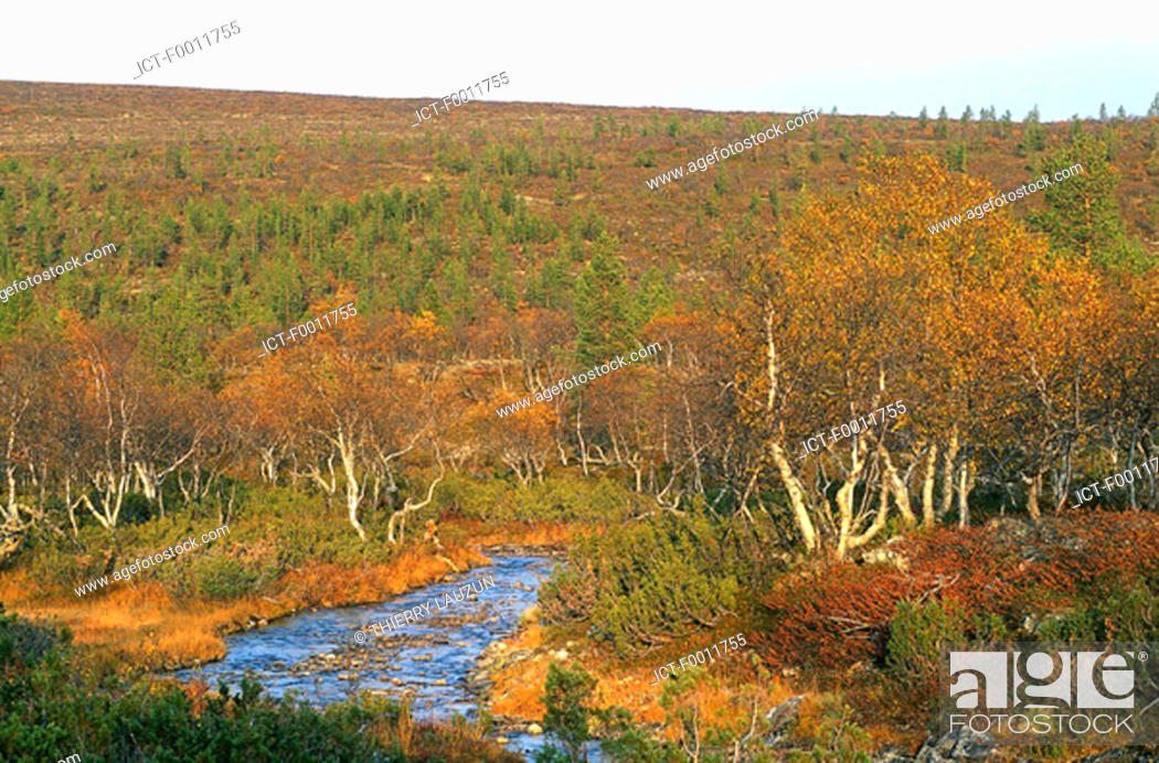 Stock Photo: Finland, Lapland, Urho Kekkonen national park.