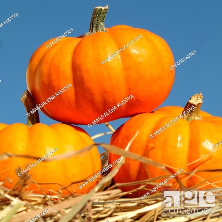Stock Photo: Close-up of pumpkins on straw.