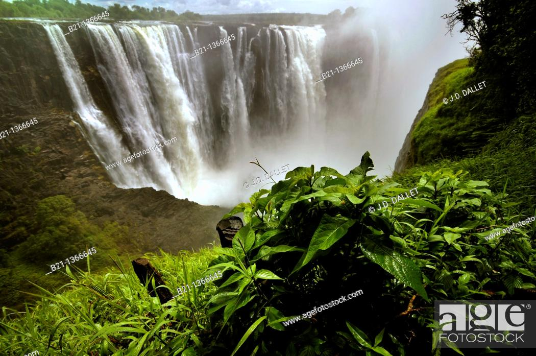 Stock Photo: Rainforest, Victoria Falls, Zimbabwe.