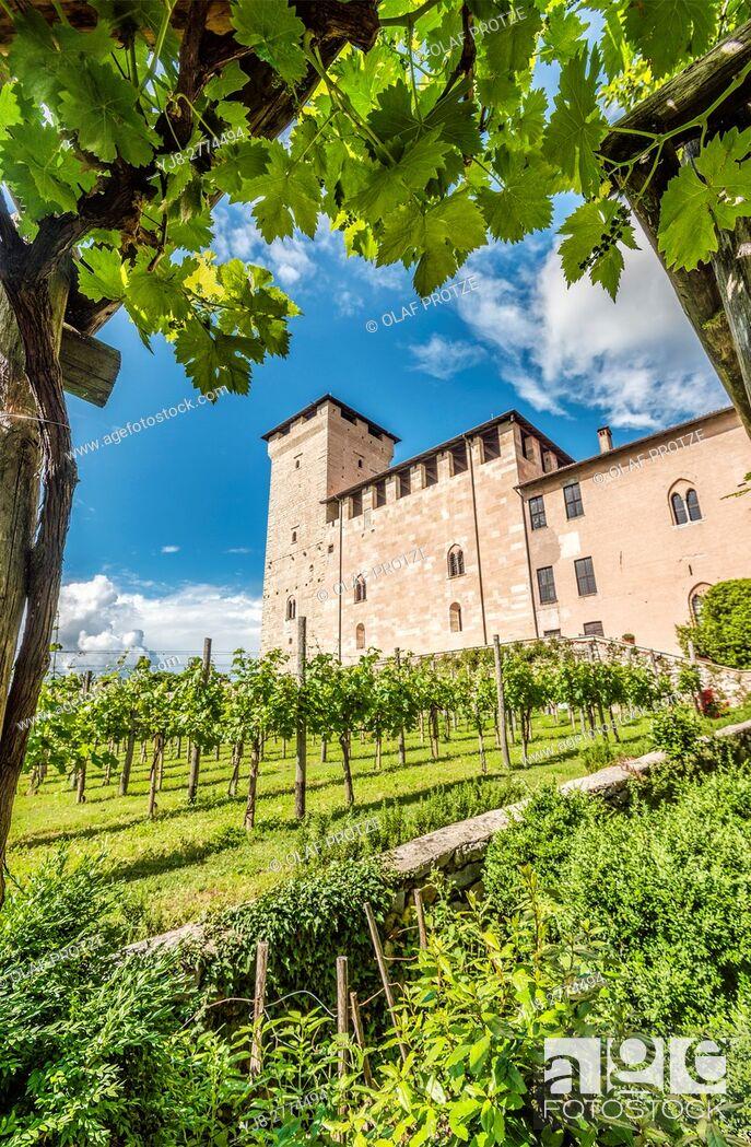 Stock Photo: Vineyard at the castle garden inside Rocca di Angera at Lago Maggiore, Varese, Italy.