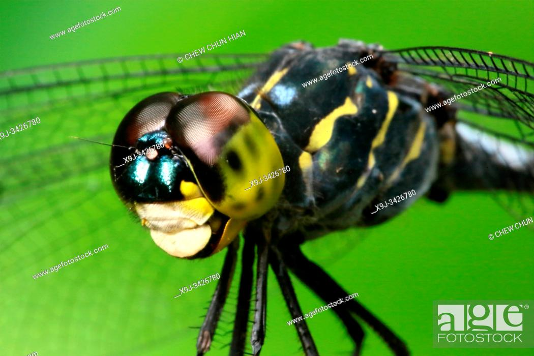 Stock Photo: Dragonfly in nature.