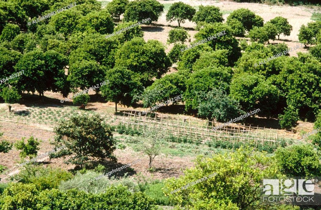 Stock Photo: Orchards near Alcalá de los Gazules. Cádiz province, Spain.