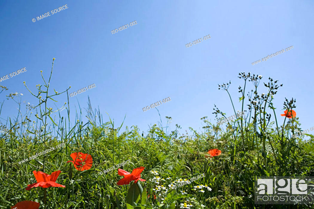 Stock Photo: Field in summer.