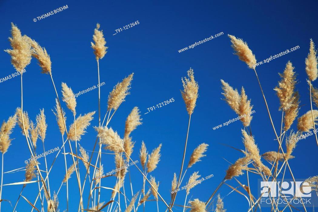 Stock Photo: Grass, Jammu and Kashmir, Northern India.