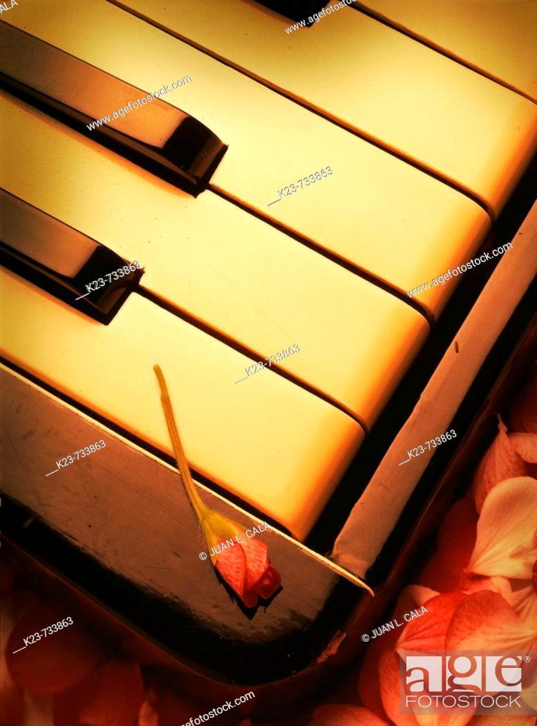 Stock Photo: Accordion.
