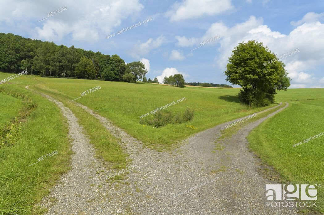 Photo de stock: Forked dirt road in summer, Hofbieber, Rhoen mountain range, Hesse, Germany.
