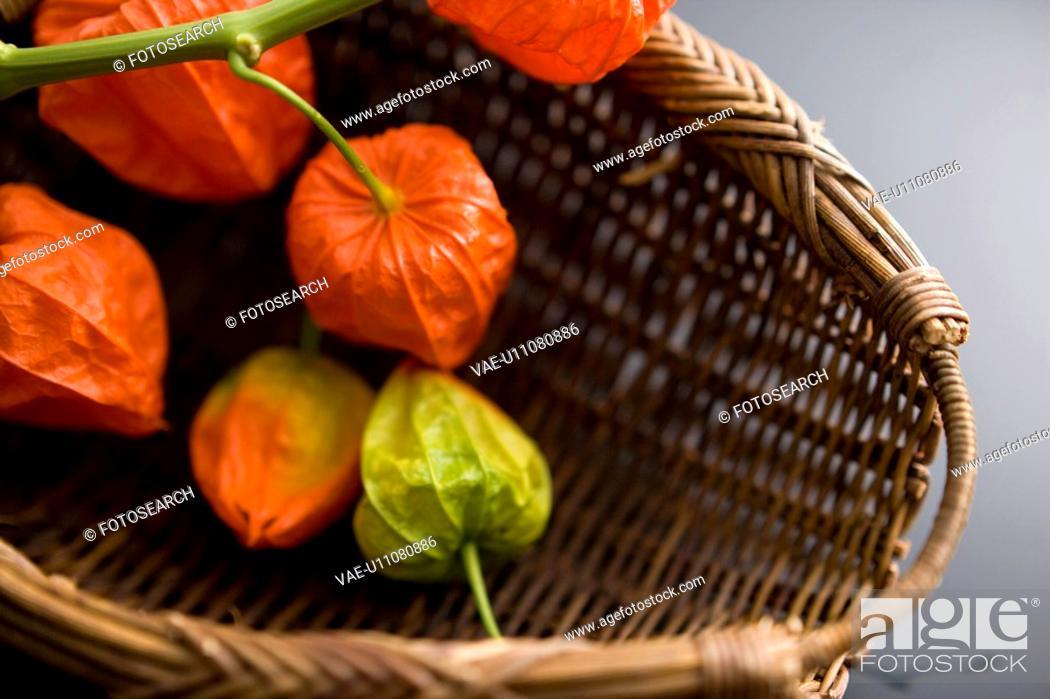 Stock Photo: Chinese lantern plant.