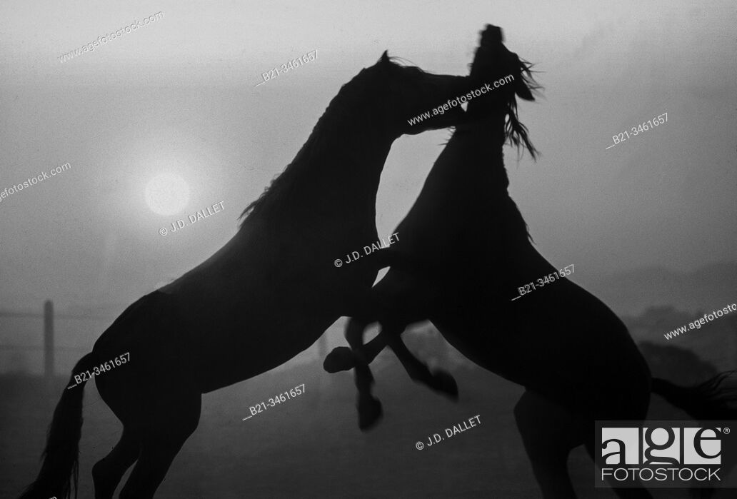 "Stock Photo: Spain, Andalusia, Cadiz, """"Yeguada de vico"""", near Jerez. Horses."