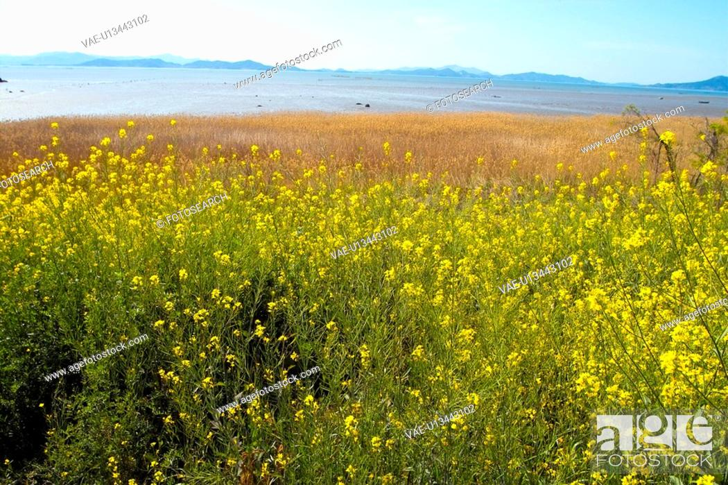 Stock Photo: plants, scenery, plant, flower, field, flowers, nature.