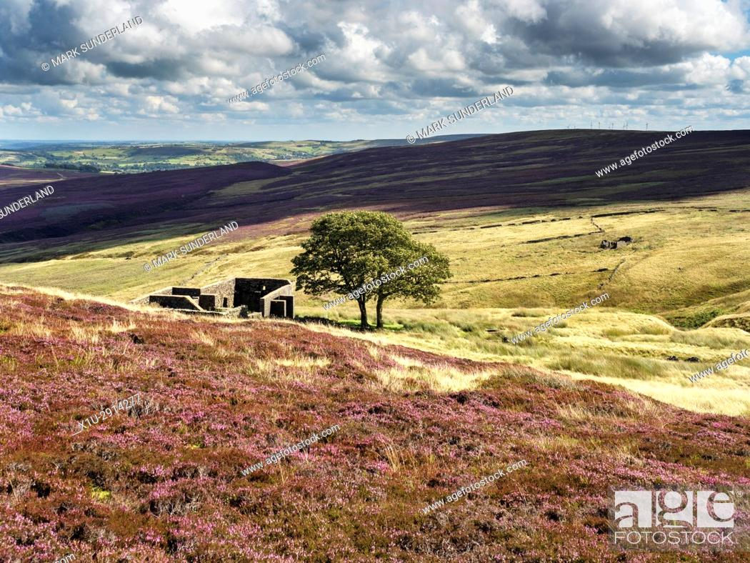 Imagen: Top Withins on Haworth Moor in Summer near Haworth West Yorkshire England.