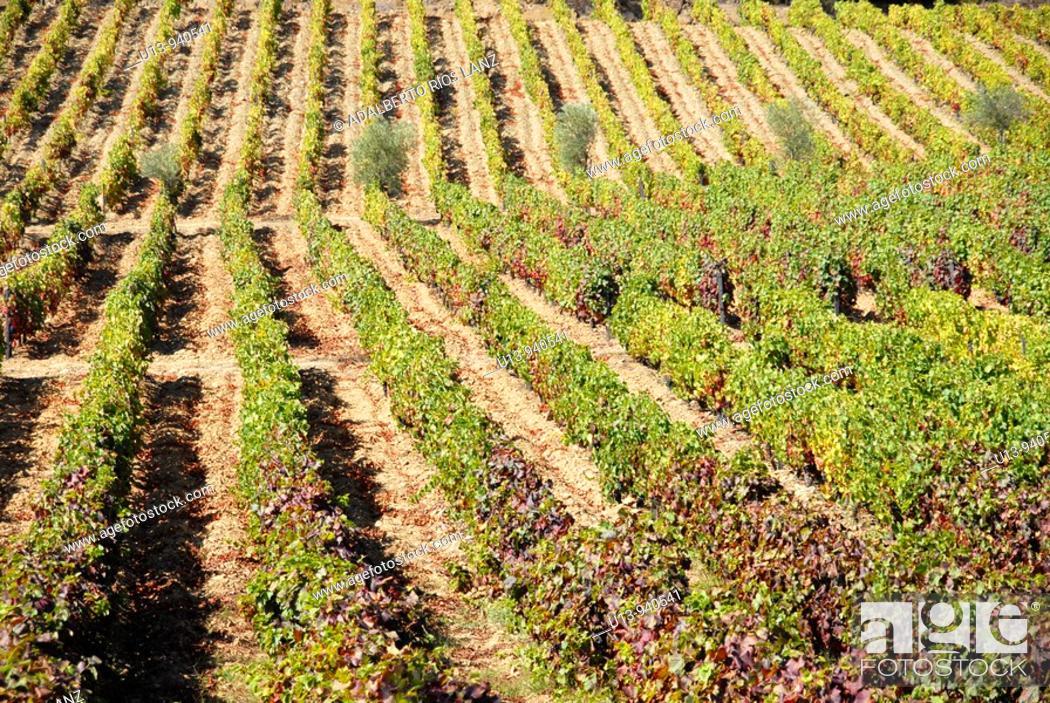 Stock Photo: Porto wine vineyards, Douro river valley, Pinheiro, Portugal.