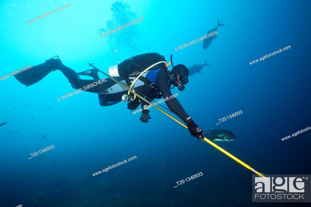 Stock Photo: Researcher takes samples of Bull Shark Skin, Beqa Lagoon, Viti Levu, Fiji.