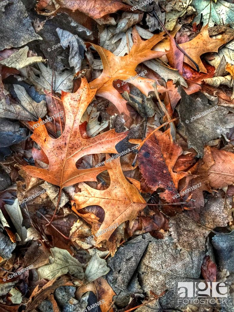 Stock Photo: Dead and decaying leaves in early winter.