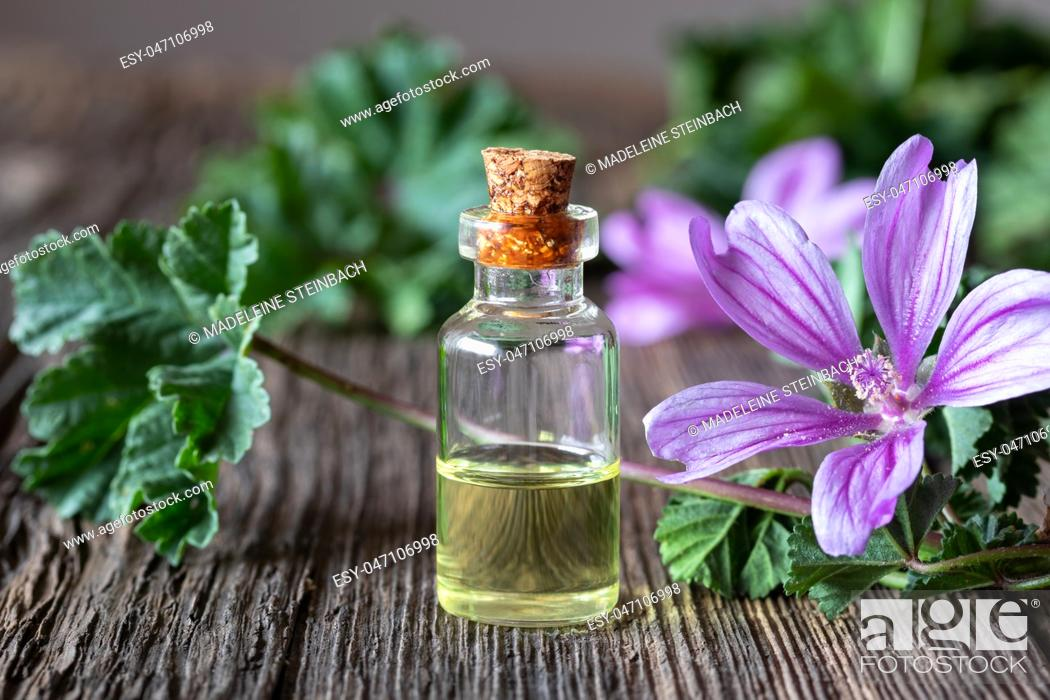 Imagen: A bottle of common mallow essential oil with fresh malva sylvestris plant.