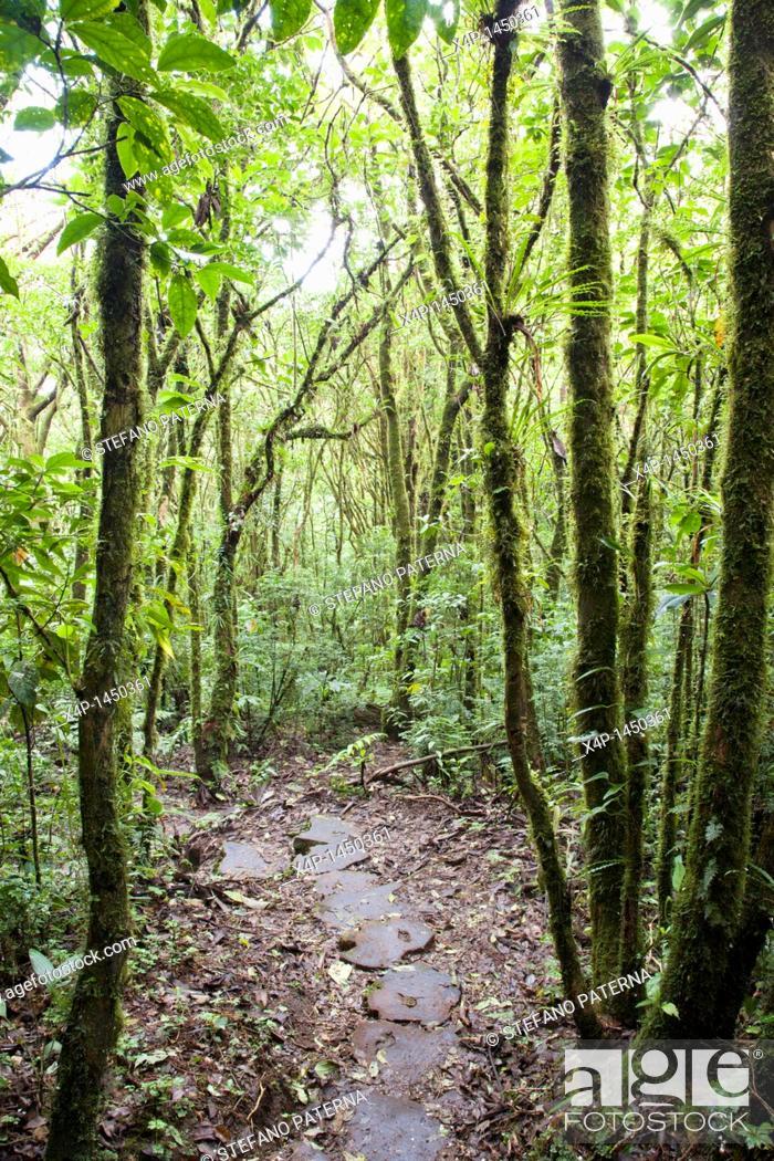 Stock Photo: Santa Elena Cloud Forest Preserve  Costa Rica.