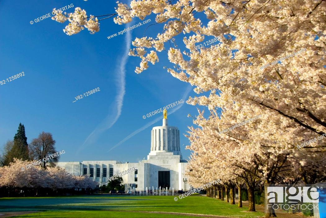 Stock Photo: State Capitol with cherry tree bloom, Oregon State Capitol grounds, Salem, OR.