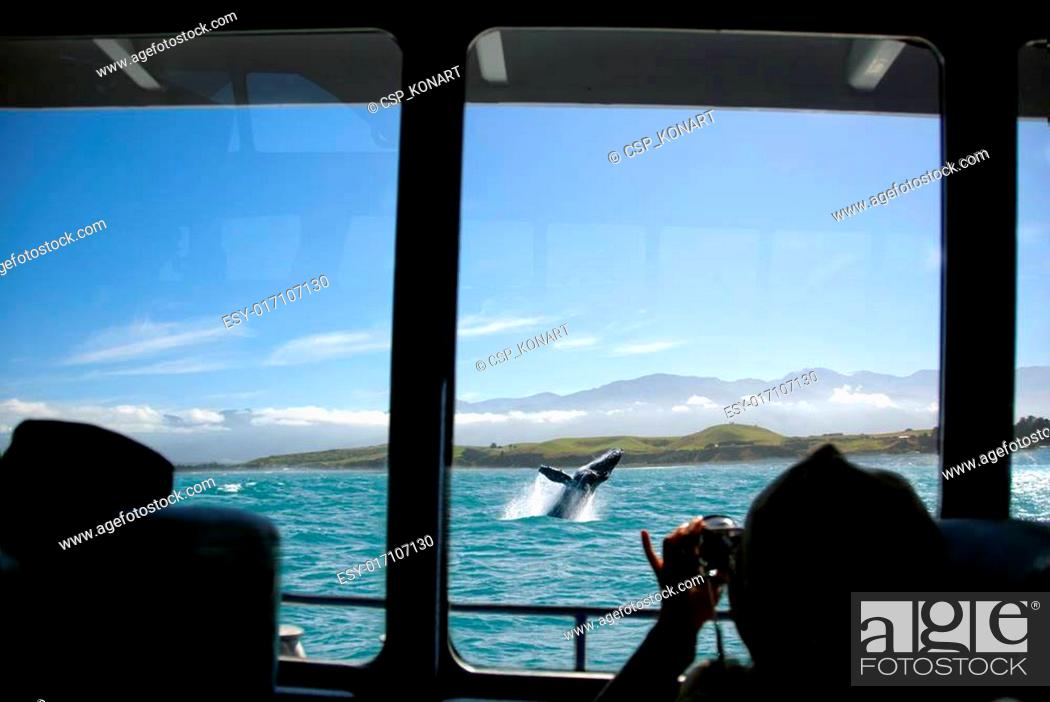 Stock Photo: Humpback Whale Jumping Out Of The Water.