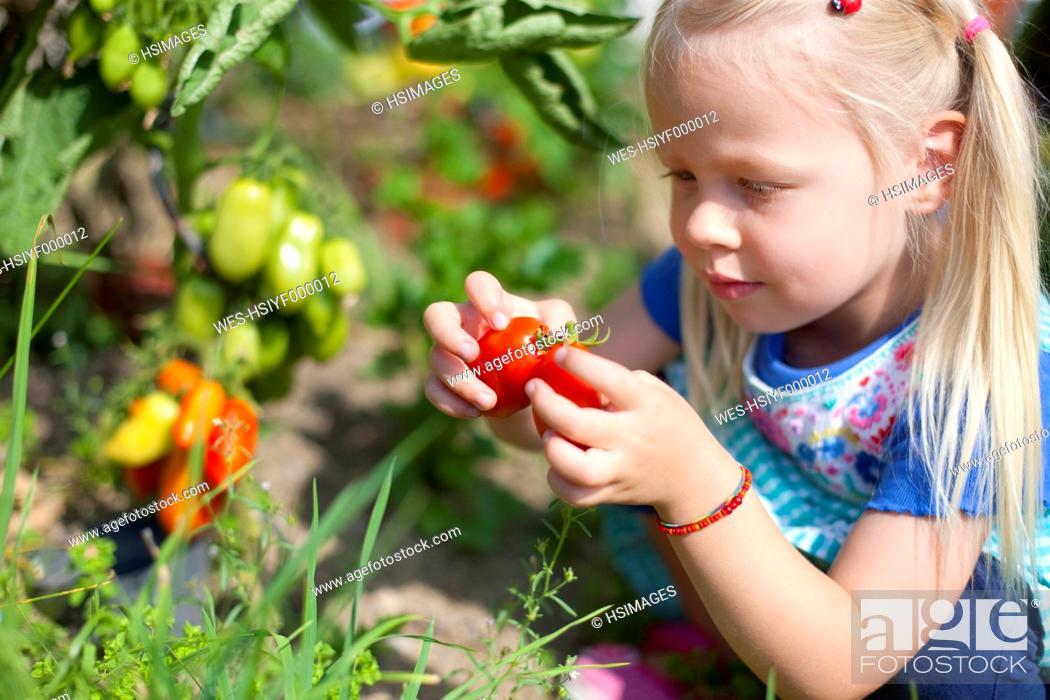 Stock Photo: Germany, Bavaria, Girl picking tomatoes in garden.