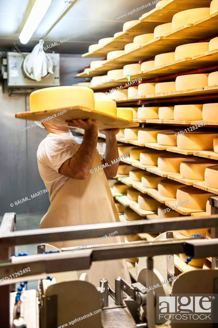 Stock Photo: Wheels of cheese being stored on shelves to rippen.