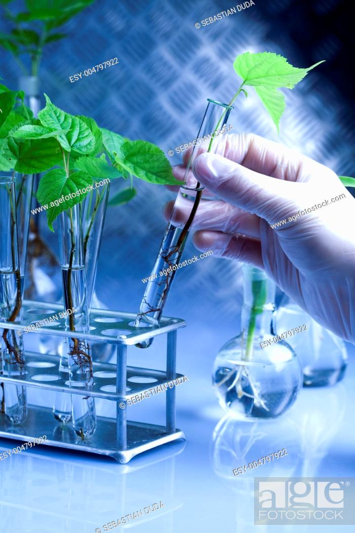 Stock Photo: Ecology laboratory experiment in plants.