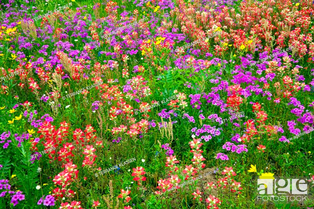 A Field Of Multi Colored Spring Flowers Near New Berlin Texas Usa