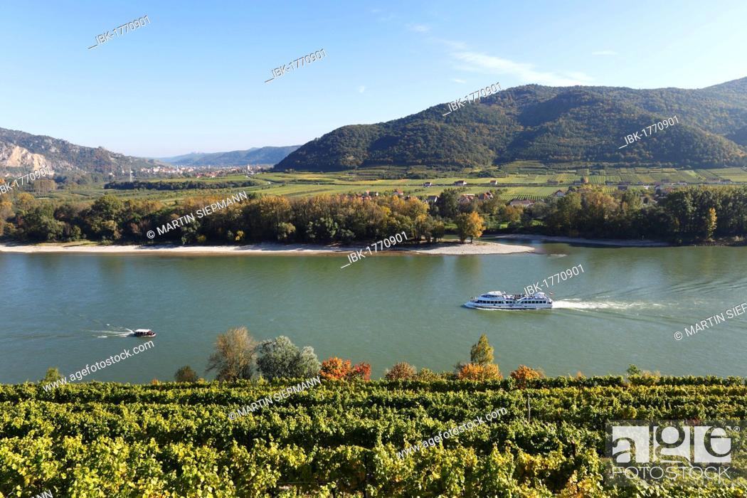 Stock Photo: Achleiten vineyards near Weissenkirchen, Donau-Auen Venedigau with Duernstein in the distance, Wachau, Mostviertel, Must Quarter, Lower Austria, Austria, Europe.