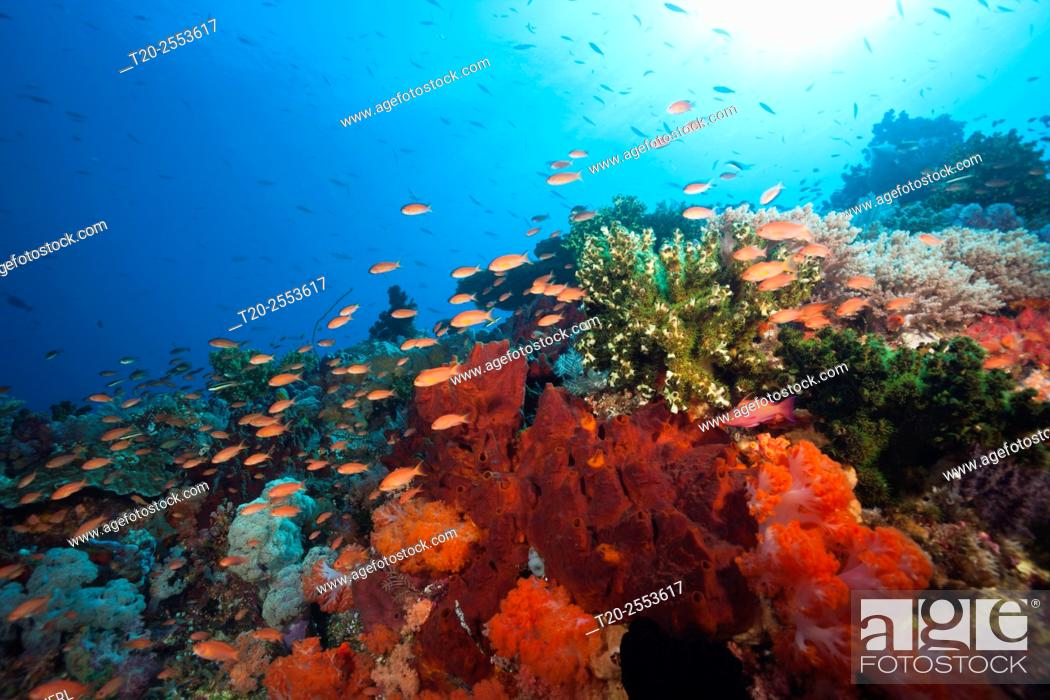 Stock Photo: Colored Coral Reef, Komodo National Park, Indonesia.