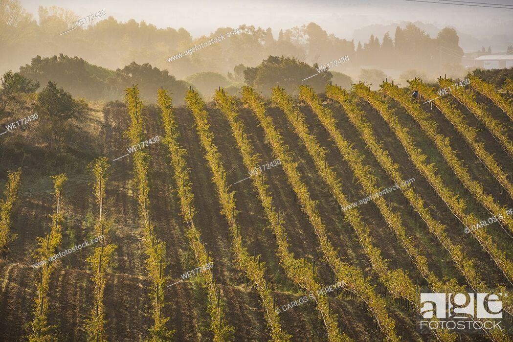 Photo de stock: Vineyards producing organic wines in the Emporda region north of the Costa Brava in Catalonia Spain.