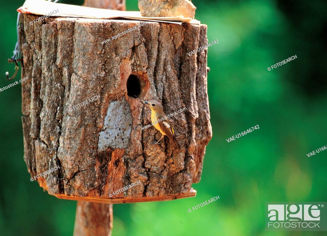 Stock Photo: landscape, bird, natural world, scenery, nature, scenic, animal.