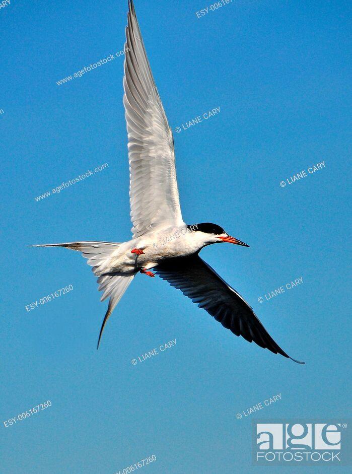 Imagen: birds.