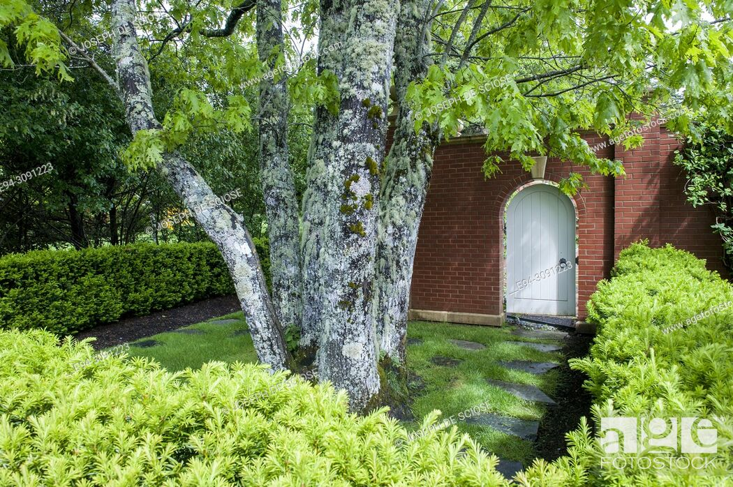 Photo de stock: A well designed garden room with trees, shrubs and a white oval toped door in a brick wall.