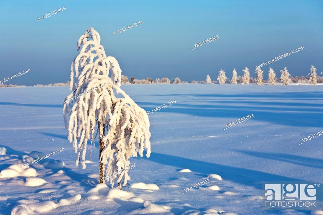Stock Photo: Winter, Tartu County, Estonia, Europe.