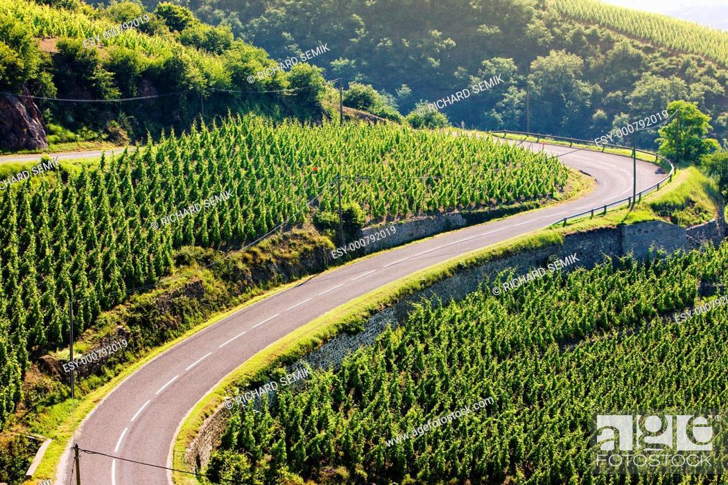 Stock Photo: grand cru vineyard, Côte Rotie, Rhône-Alpes, France.