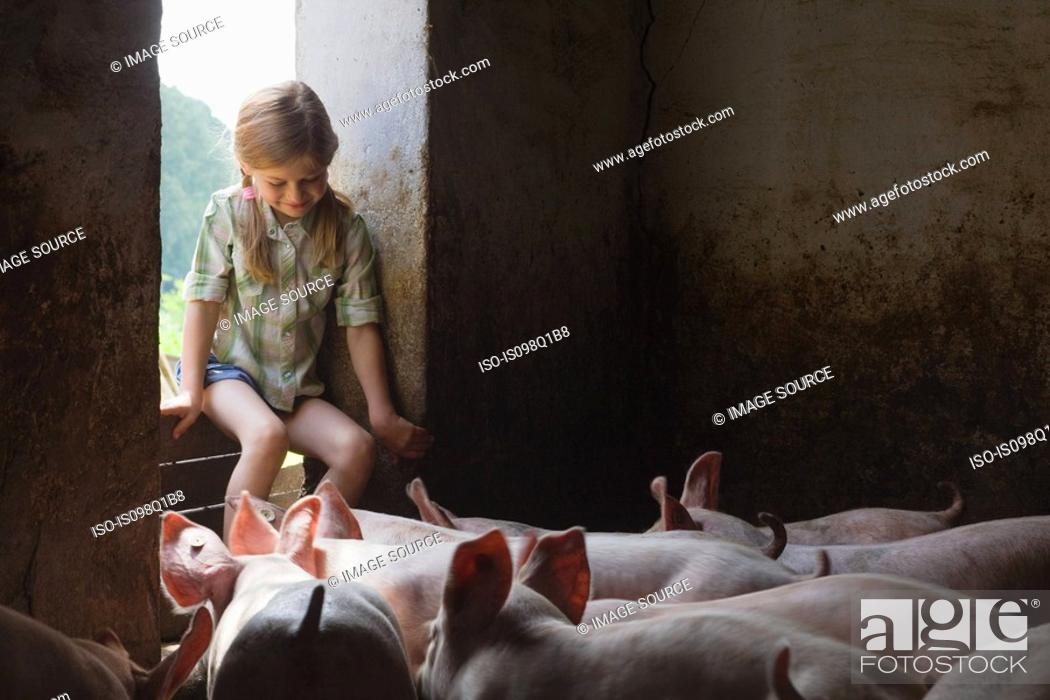 Stock Photo: A girl and pigs in a pigsty.